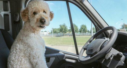 turismo con mascota