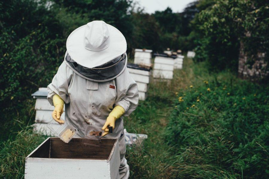 ayudas a la miel