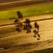 Una manada de jabalíes provoca un choque en cadena en Villamartín de la Abadía